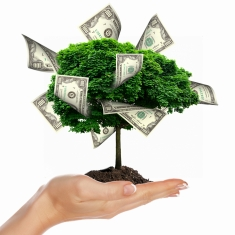 Money Tree with cuts on his hand of man. a symbol of financial success.